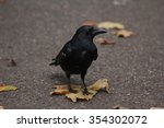 Small photo of Raven standing on a leaf