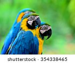 Cute Blue And Gold Macaw Birds...