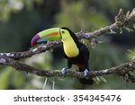 keel billed toucan perched on a ... | Shutterstock . vector #354345476