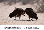 Small photo of Lappet-faced Vulture (Aegypius tracheliotus) Kgalagadi Transfrontier Park, South Africa. Jpg