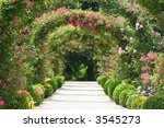 Stock photo roses in the garden 3545273