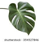 leaf of monstera plant. | Shutterstock . vector #354527846