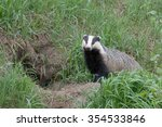 badger near of the hole.... | Shutterstock . vector #354533846