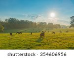 Grazing Cows In A Kentucky Field