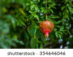 red ripe pomegranates on the... | Shutterstock . vector #354646046