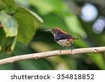 scarlet backed flowerpecker on... | Shutterstock . vector #354818852