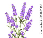 bunch of lavender flowers on a... | Shutterstock .eps vector #354831158
