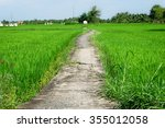 lonely footpath in the field  | Shutterstock . vector #355012058