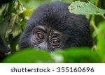 portrait of a mountain gorilla. ... | Shutterstock . vector #355160696