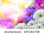 Morning Glory Flowers. Floral...