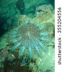 Small photo of A turquoise spiny sea urchin, Acanthaster, in the deep sea.