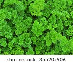 parsley | Shutterstock . vector #355205906