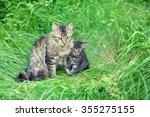Mom Cat With Little Kitten On...