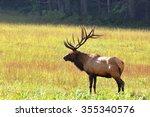 Bull Elk During Autumn At...