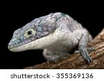 Small photo of Arboreal alligator lizard (Abronia graminea)