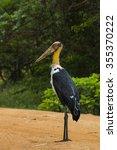 Small photo of Lesser adjutant Stork at Yala