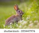 Stock photo european wild rabbit oryctolagus cuniculus in lovely green vegetation surroundings with white 355447976