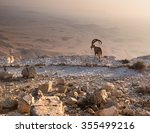 A Fearless Ibex Overlooks The...