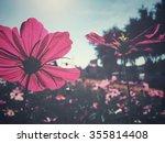 pink cosmos flowers | Shutterstock . vector #355814408
