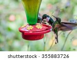 Hummingbirds At The Feeder In...