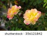 My English Rose No.5