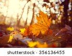 Yellow Maple Leaf On The Groun...
