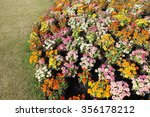 multicolored flowerbed on a lawn | Shutterstock . vector #356178212