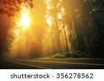 Redwood Foggy Sunset Scenery....