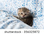 Stock photo close up of cute kitten sitting on the bed 356325872