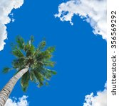 Coconut Tree Under Blue Sky And ...