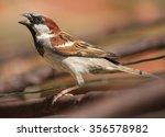 male house sparrow  passer... | Shutterstock . vector #356578982