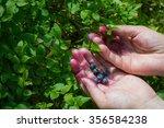girl in the woods picking... | Shutterstock . vector #356584238