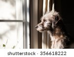 cute little terrier crossbreed... | Shutterstock . vector #356618222