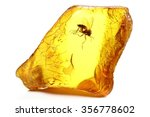baltic amber with a fungus gnat ... | Shutterstock . vector #356778602