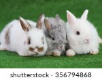 Stock photo group of three baby adorable rabbits white and grey netherlands dwarfs rabbit and white and brown 356794868