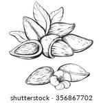 almonds. hand drawn sketches... | Shutterstock .eps vector #356867702