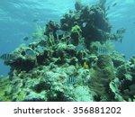Small photo of School of sergeant major fish (Abudefduf saxatilis) around a coral head of the coast of Utila