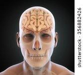 human brain anatomy | Shutterstock . vector #356882426
