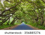Road Covered By Tree Canopies...