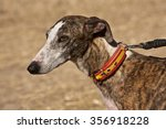The Greyhound Is A Breed Of Do...