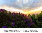Purple Princess Flower  Glory...
