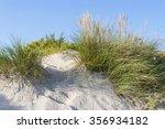 vegetation growing over the...   Shutterstock . vector #356934182