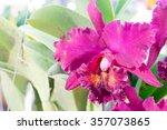 close up thai cattleya orchid... | Shutterstock . vector #357073865