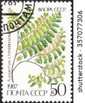 "Small photo of USSR - CIRCA 1987: a post stamp printed in the USSR shows a plant with the inscripton ""Adiantum pedatum"", the series ""Ferns"", circa 1987"