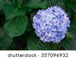 top view of hydrangea flower | Shutterstock . vector #357096932