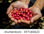 many red coffee cherries in the ... | Shutterstock . vector #357160622