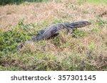 big lizard on the garden in ...   Shutterstock . vector #357301145