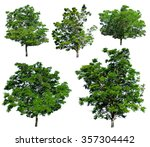 trees isolated | Shutterstock . vector #357304442