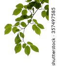 green tree branch isolated | Shutterstock . vector #357497585