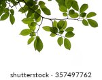 green tree branch isolated | Shutterstock . vector #357497762